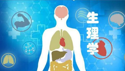 消化系统组成图卡通版